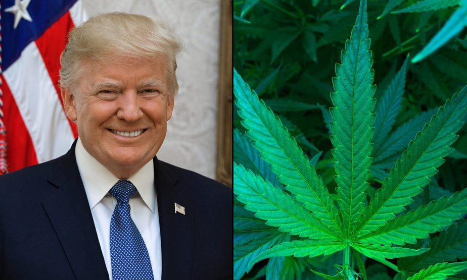 Trump Campaign Orders Mississippi Medical Marijuana Activists To Cease Using President's Name.