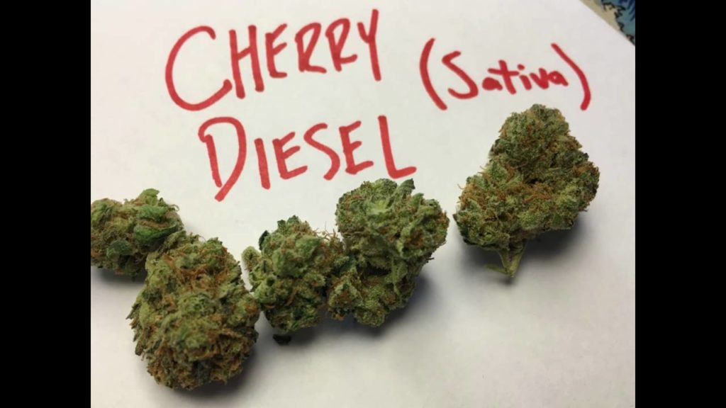 Cherry Diesel Strain Review